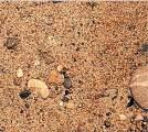 Песок строительный, ПГС,пескогрунт  с доставкой по Владимирской области